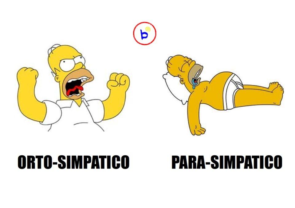 ortosimpatico vs parasimpatico